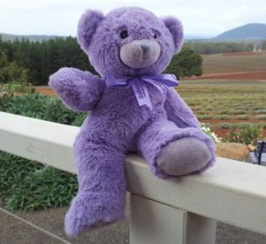 China, Consumer, Teddy bear, Zhang Zingyu, Freight
